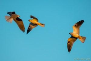 birds - 850_9339.jpg