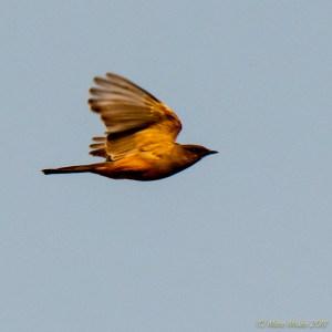 birds - 850_9414.jpg
