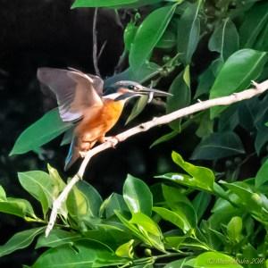 birds - 851_2852.jpg