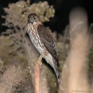 birds - DSC_0116-2.jpg