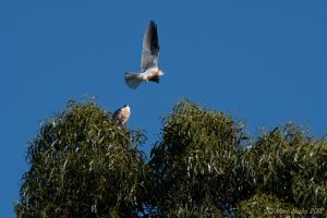 birds - MEM_3064.jpg