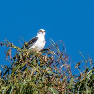 birds - MEM_3131.jpg
