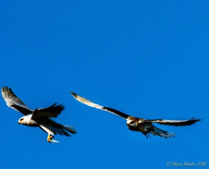 birds - MEM_3323-Edit.jpg
