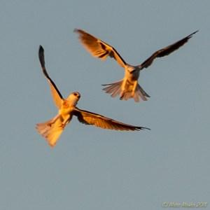 birds - PA050261.jpg