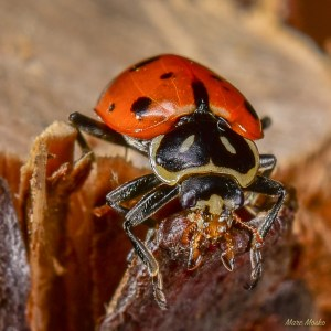 insects - DSC_4212.jpg