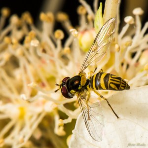 insects - DSC_7257.jpg