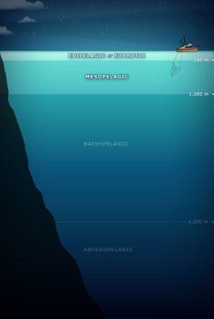 Pelagic waters – Oceanic fish – Te Ara Encyclopedia of New
