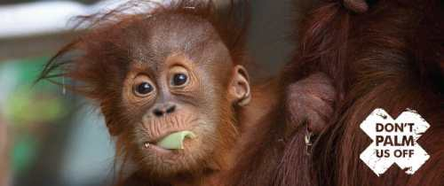 Zoos Victoria Palm Oil Petition