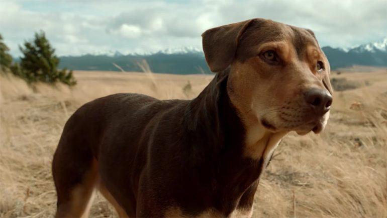 dog movie 2019