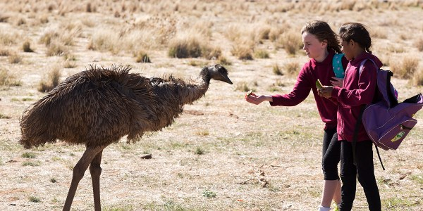Emu Runner Movie