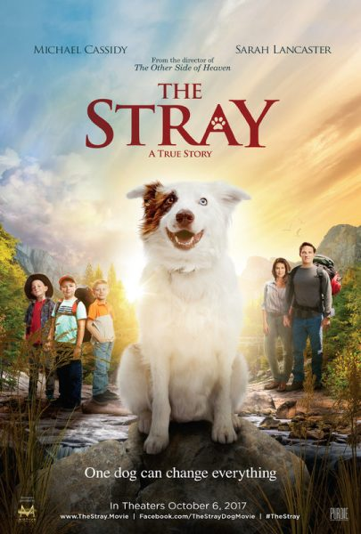 The Stray Movie Poster