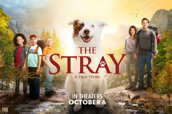 The Stray Movie