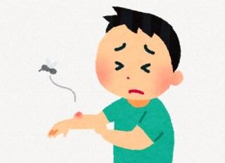蚊にさされてダメと言われていても掻きむしりたくなる時にはこれがお勧め?