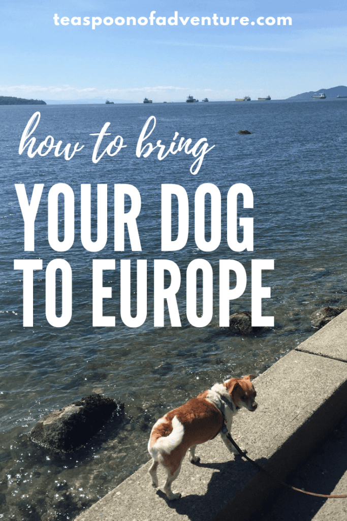 Everything you need to know to travel with your dog to Europe! #travel #traveltips #pettravel #dogs