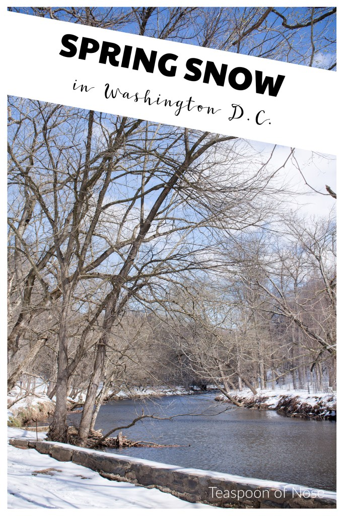 Snow in D.C. is beautiful! Here's a few ways to enjoy it if you get to see D.C. in snow! | Teaspoon of Nose