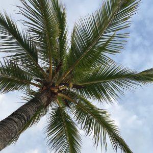 Things to do in Playa del Carmen | Teaspoon of Nose