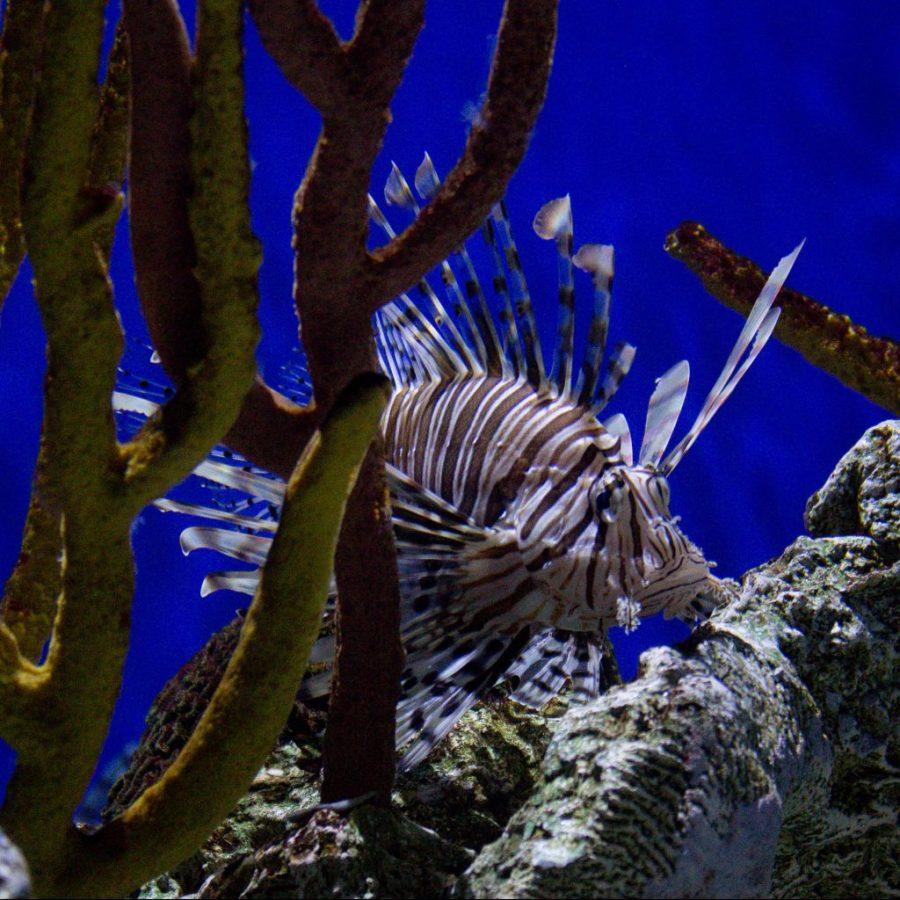 Exploring the Georgia Aquarium in Atlanta!   Teaspoon of Nose