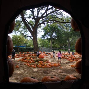 The number one thing to do in Dallas in the Fall: pumpkins at the Dallas Arboretum!
