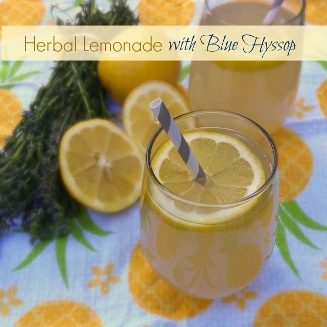 Herbal Lemonade with Blue Hyssop | Teaspoonofspice.com