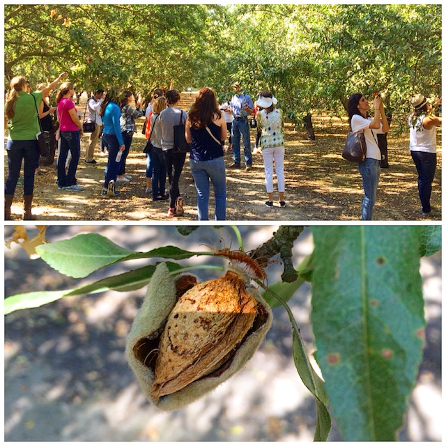 Almond Tour crowd in the orchard