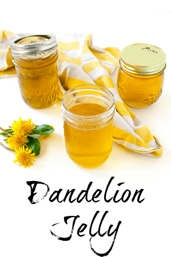 Tastes like honey! Impossibly easy to make: DANDELION JELLY | @TspCurry - TeaspoonOfSpice.com