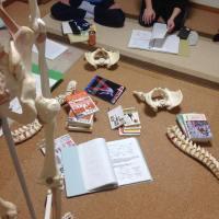 解剖学授業160118