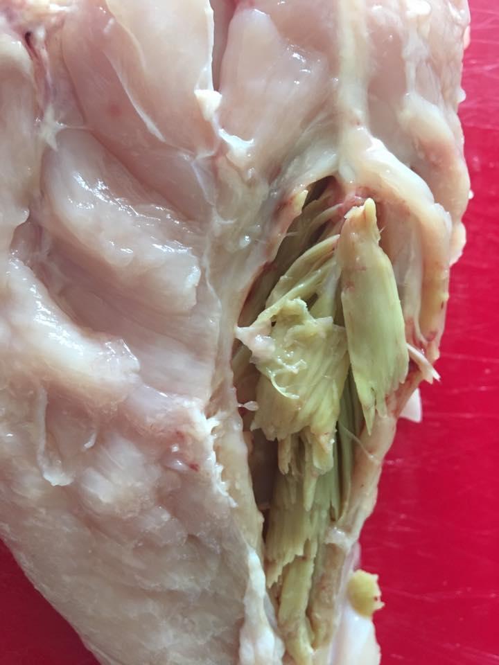grøn materiale i kyllingebryst, byld i kyllingekød, byld i kyllingekød, betændelse i kyllingekød, artiskok i kyllingebrystet, dårligt kyllingekød, fremmede materiale i kyllingekøde