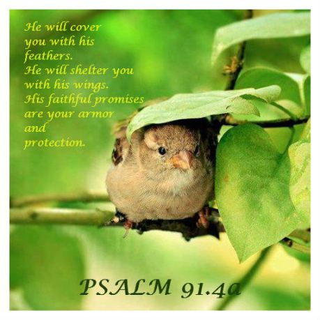 PSALM 914 KNOWING GOD