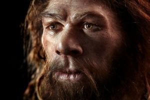 Human characteristics to adapt is a result of Neanderthal genes
