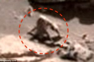 Alien creatures like monkey, spider and snail spotted on Mars in NASA image: UFO Sightings