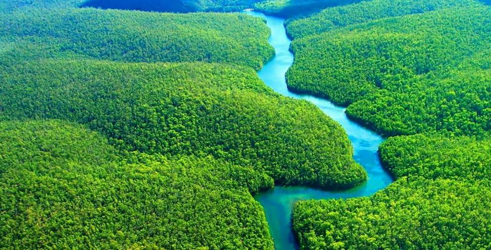Image result for amazon rainforest