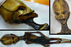 Scientists say mummy found in 2003 is actually a female human being and not an alien