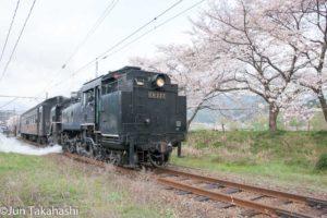 大井川鐵道SLと桜