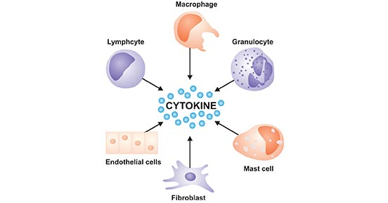 1- Best info about cytokines 1