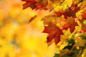 Image of Fall Leaves