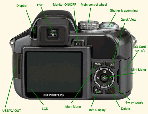 Useful photo tips will help you take better pictures