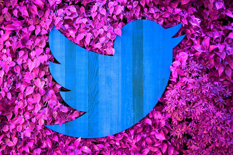 Twitter-Logo-Brand-Photo-Leaves-Blue-Pink-Nature-Project-Lightning