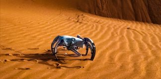 BionicWheelBot Festo Engineering Robotics Spider Biomimicry Desert Walking Jumping Rolling Adaptive Movement Robot Animal Natural Design