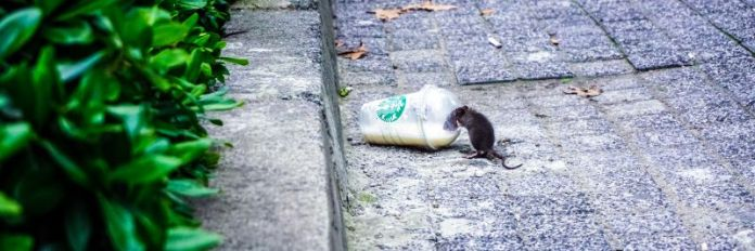 Mouse drinks from starbucks cup pest removal services for your business