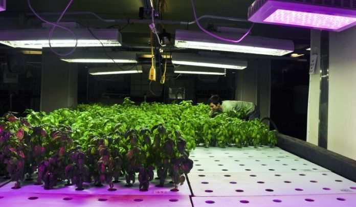 Vertical Farming Modern Agriculture Methods
