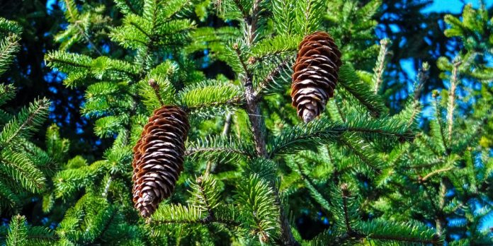 Keinachtsbaum Is a Sustainable Christmas Tree Alternative Startup Germany