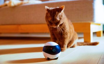 EBO Is a Smart Robot Companion for the Family - Cat With Robo Pet Friend