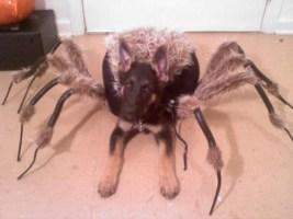 Mutant-Spider-Dog