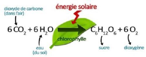 balance photosynthesis