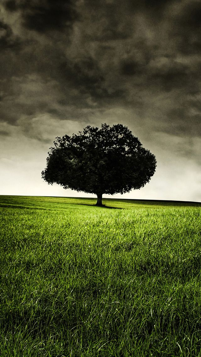single-tree-on-hill-iphone-5-wallpaper-Seavn_com