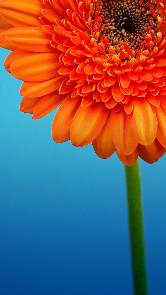 nokia-lumia-1520-wallpaper-full-hd-3