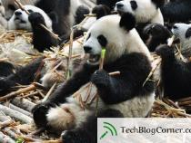 Panda 4.0: Old Panda in the New Avatar Attacked Again