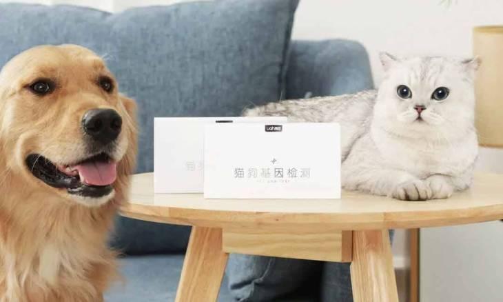 Xiaomi lança teste genético para cães e gatos
