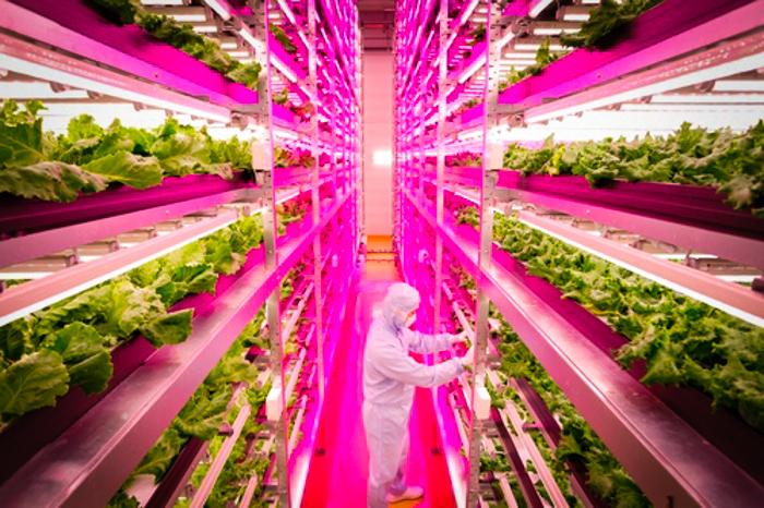 Hablemos del futuro de la comida