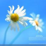 Εντοπίστηκε Η Νέα Λειτουργία Kiosk Mode Στο Windows 8.1